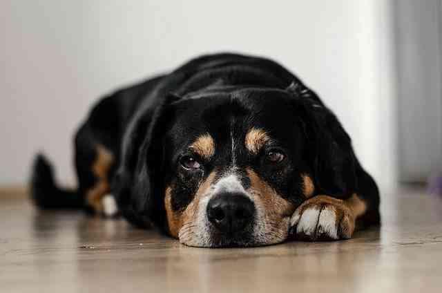 Vómitos en los perros 2