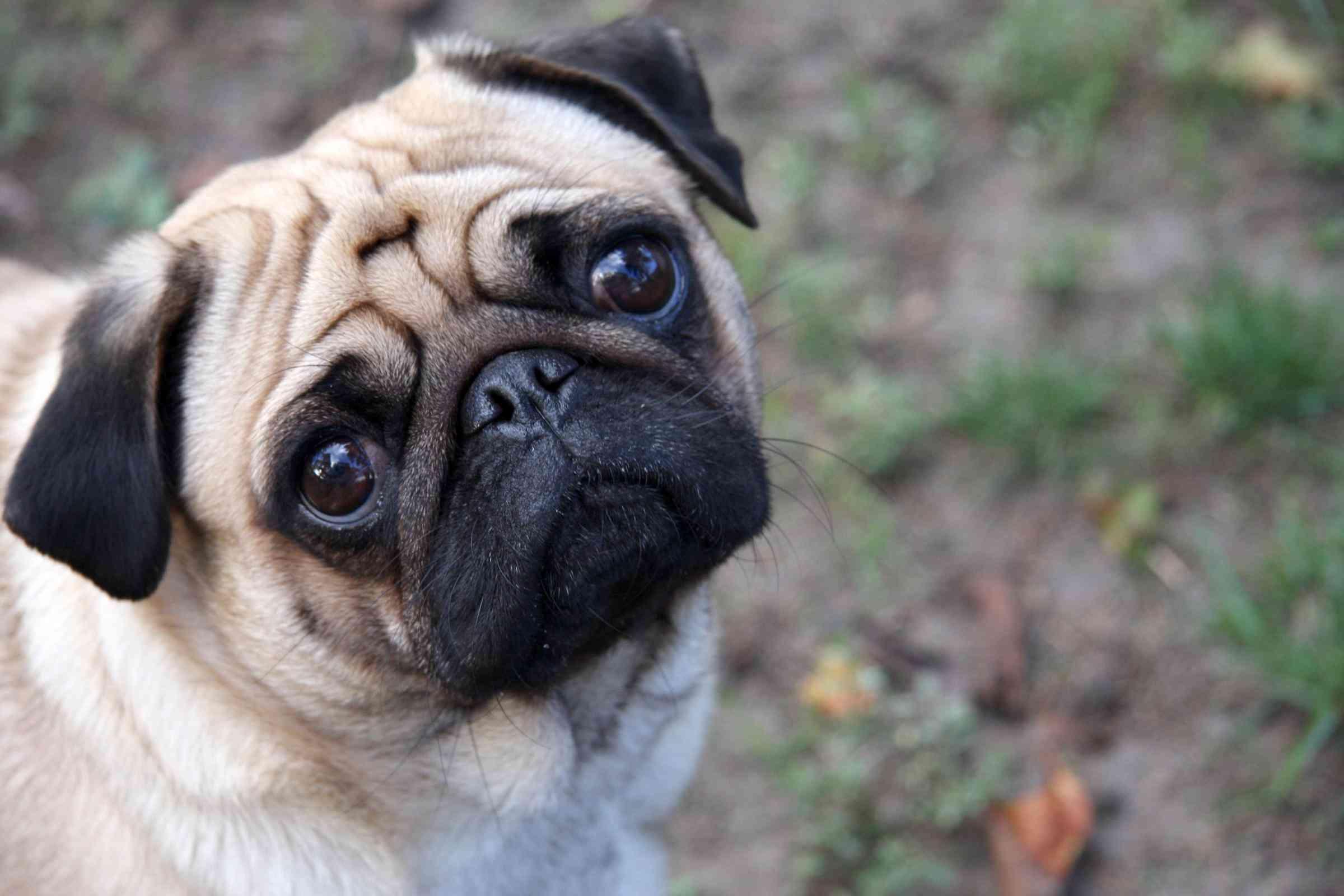 Vómitos en los perros 3