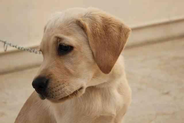 Vómitos en los perros 4