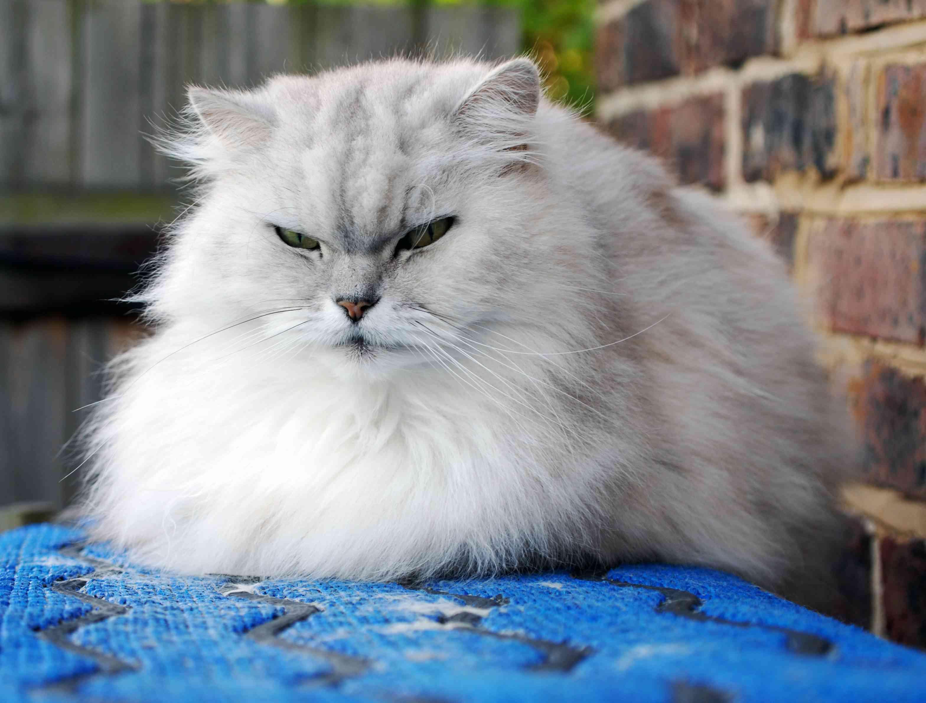 Gatos gordos 2