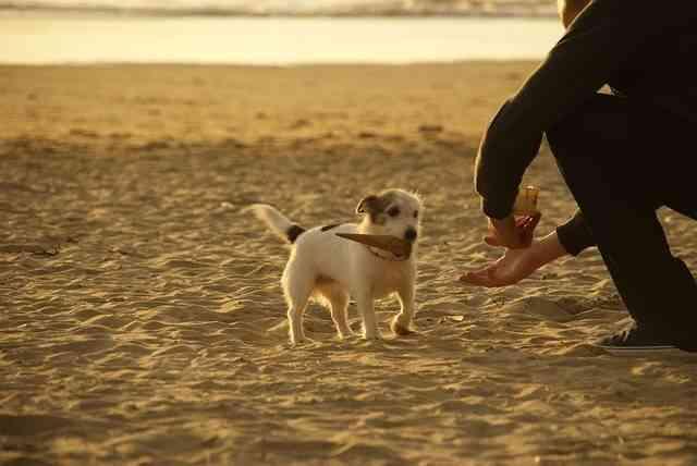 Proteger a nuestra mascota del calor 3