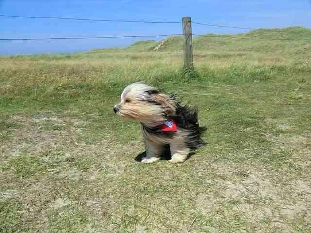 Proteger a nuestra mascota del calor 4