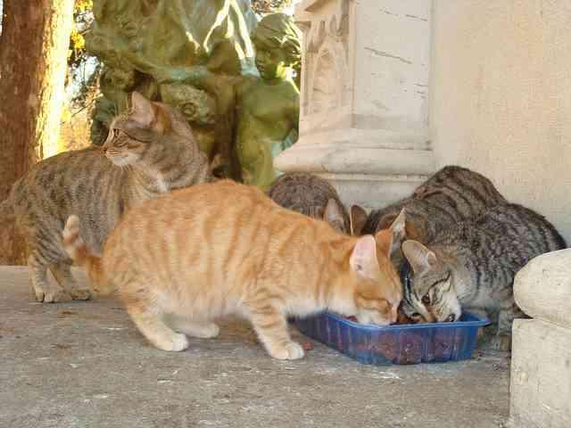 La leche puede ser perjudicial para los gatos