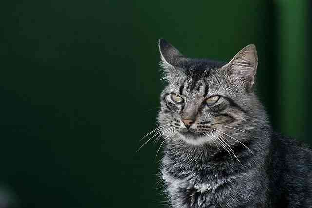 Los gatos pueden ser amaestrados