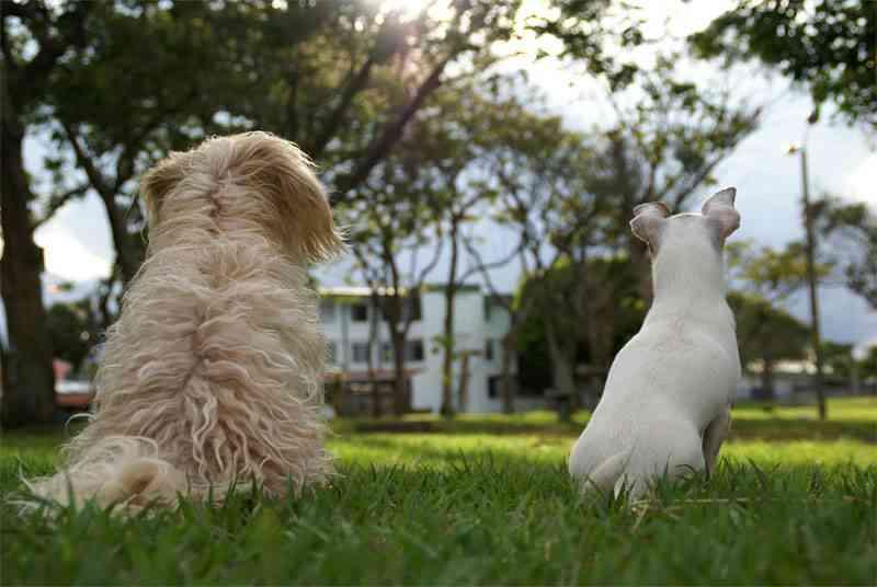 Relación entre mascotas y niños