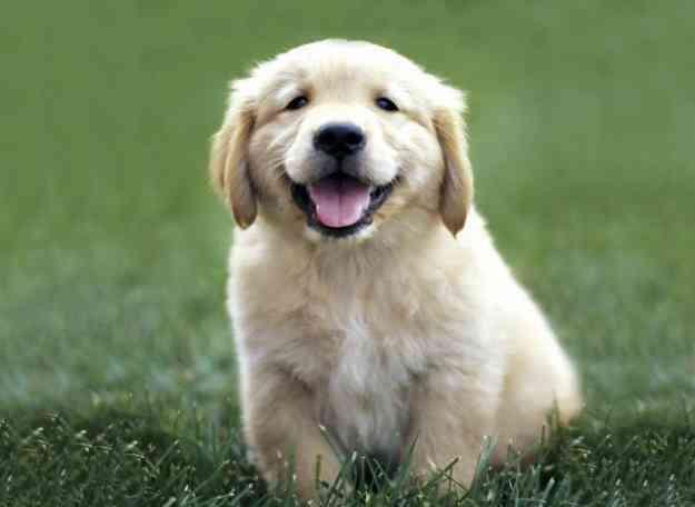 Plantas tóxicas para tu mascota