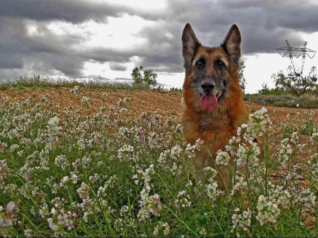 Planas tóxicas para tu mascota