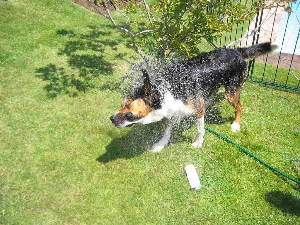 Consejos para la higiene de tu mascota