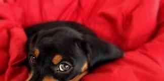 Algunos de los cuidados básicos de un cachorro