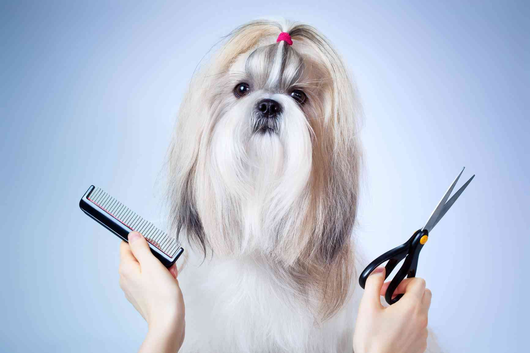proteger a las mascotas del frío - perros en la peluquería