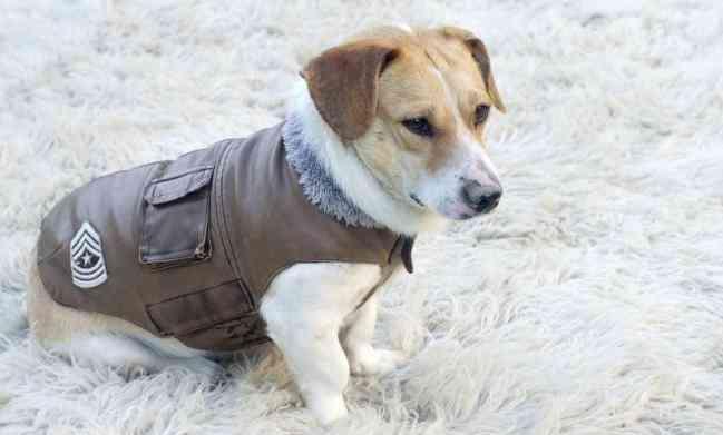 proteger a las mascotas del frío