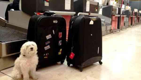viajar con tu mascota - durante el viaje