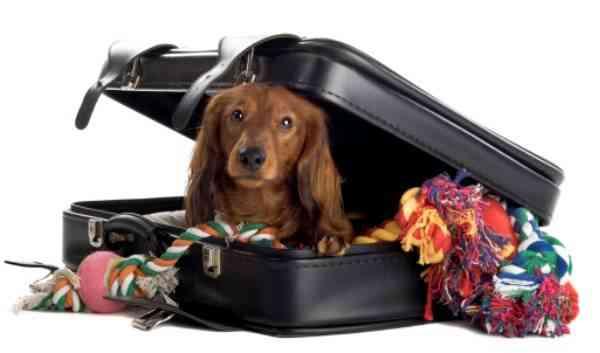 Viajar con tu mascota - organizar el viaje