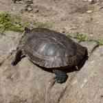 cuidar a las tortugas