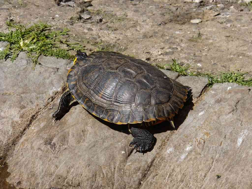 Cómo cuidar a las tortugas