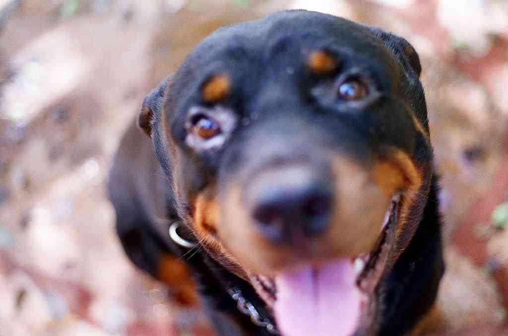 Increíbles perros que salvaron vidas