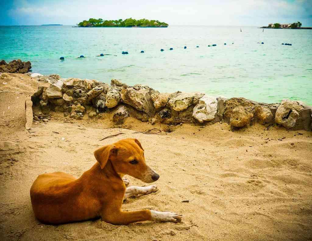 Asombrosos perros que salvaron vidas