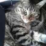 adoptar mascotas online
