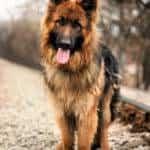 entrenar a un perro adulto2