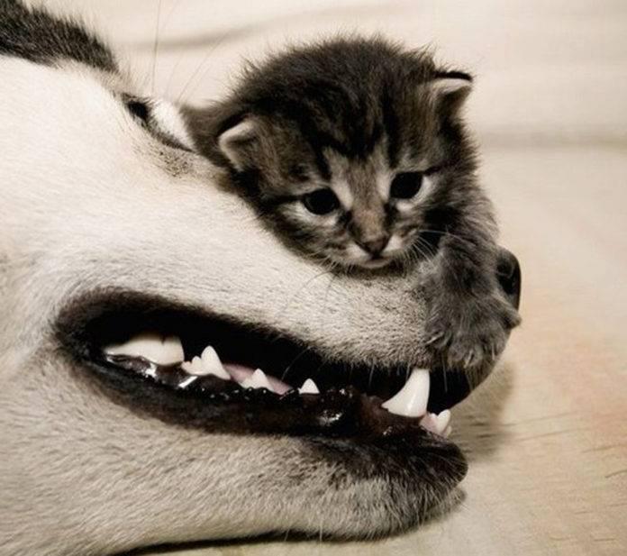 golpe de calor en tu mascota[3]