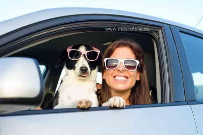 disfruta el verano con tu mascota