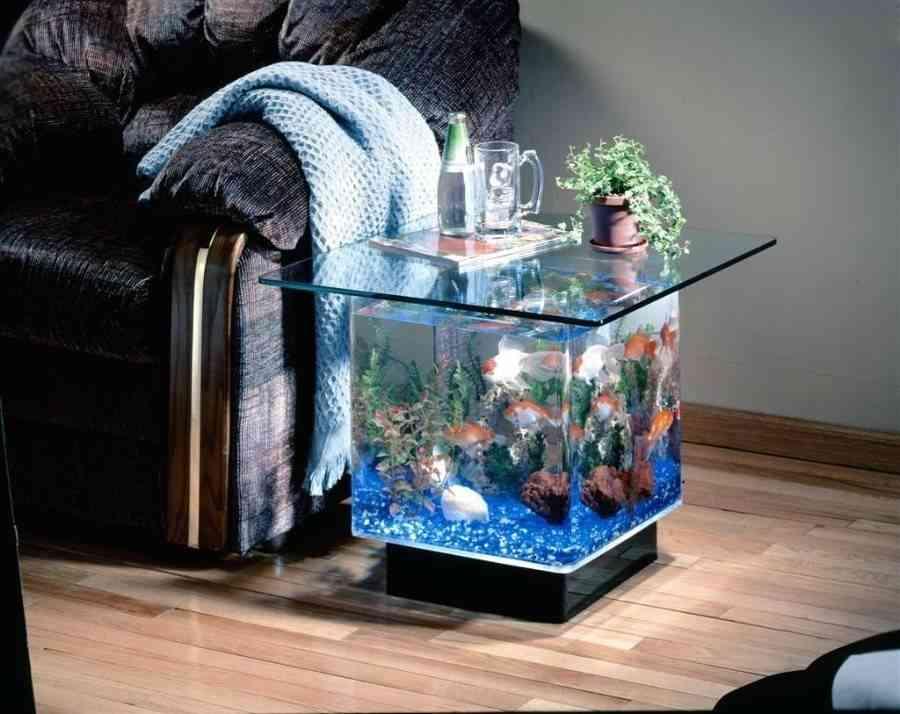 acuarios de agua fría