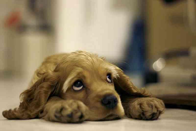 aspirina a un perro