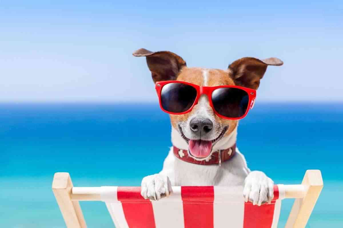 playas para perros de Espana