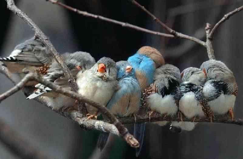 Nombres De Pájaros Y Sus Significados Cuál Prefieres
