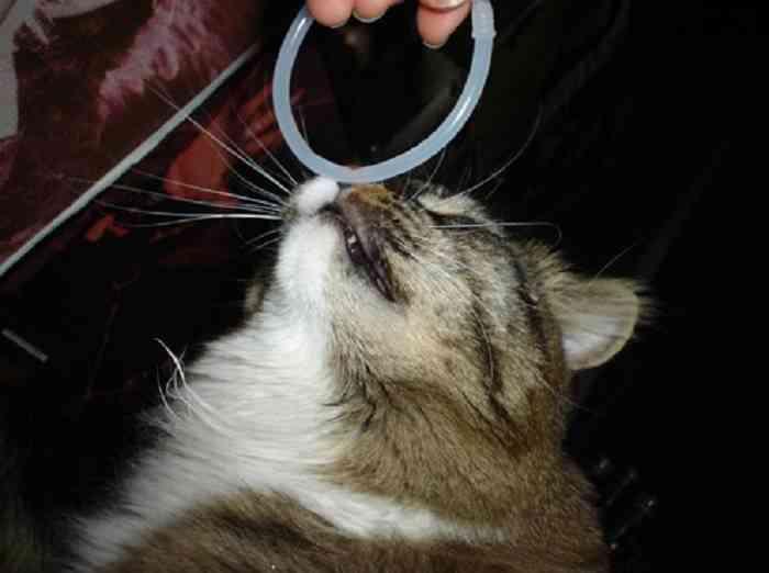 enseñar trucos a un gato