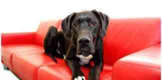 perros más tranquilos