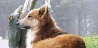 cambio de pelo en los perros