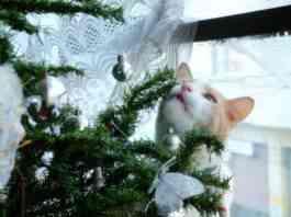gato se coma el árbol de Navidad