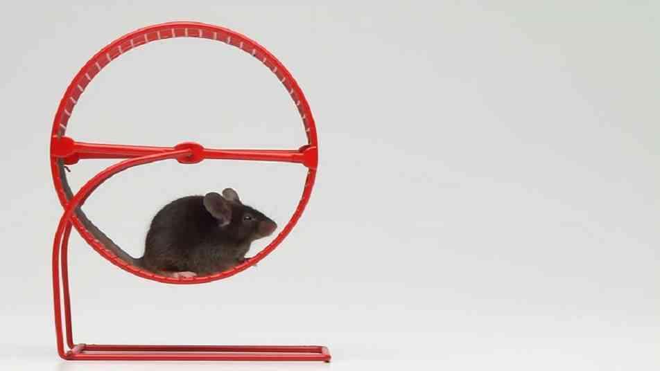 juguetes para hamster