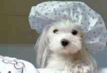 bañar a los perros