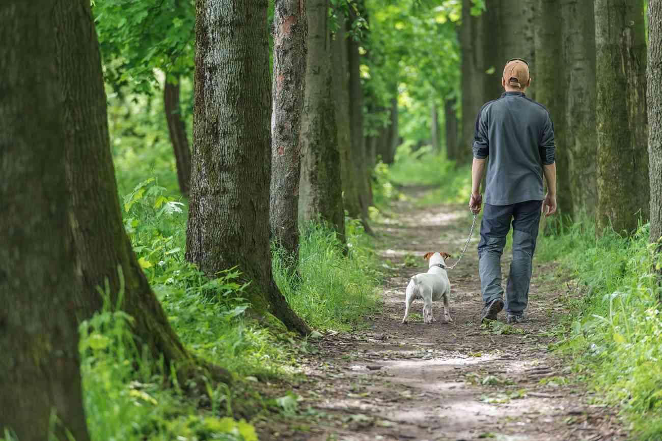 beneficios pasear con el perro