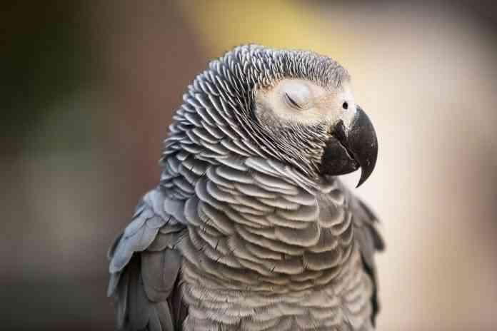 cuidados generales de las aves