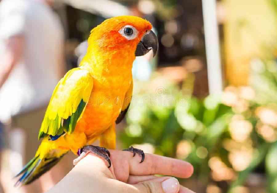 enfermedades más comunes en los pájaros