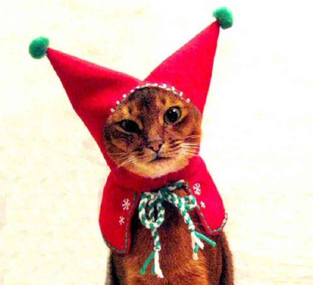 disfraces navideños para tus mascotas