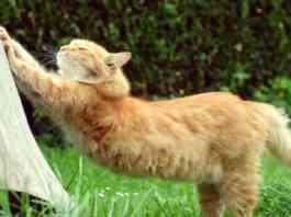 cuidados básicos de un gato senior