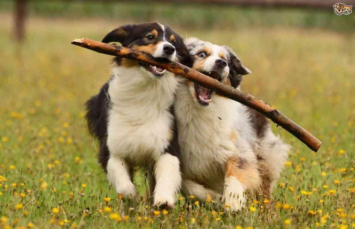 tener mascotas más felices