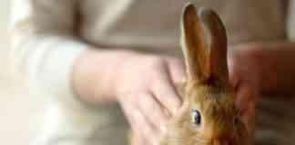 cuidar a un conejo en casa