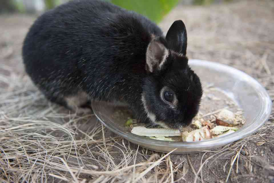 caring for a rabbit at home