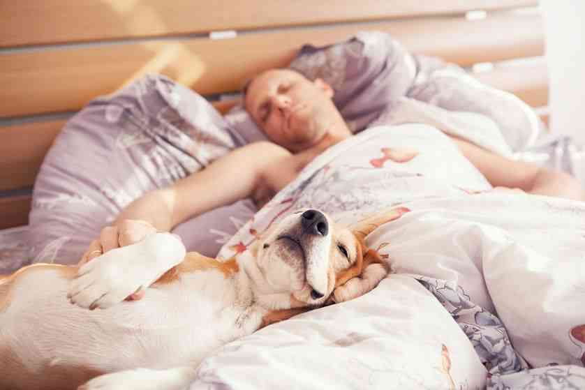 dog sleeps with you