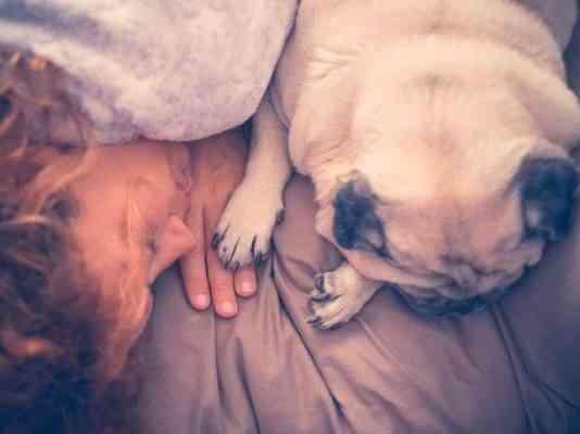 perro duerme contigo