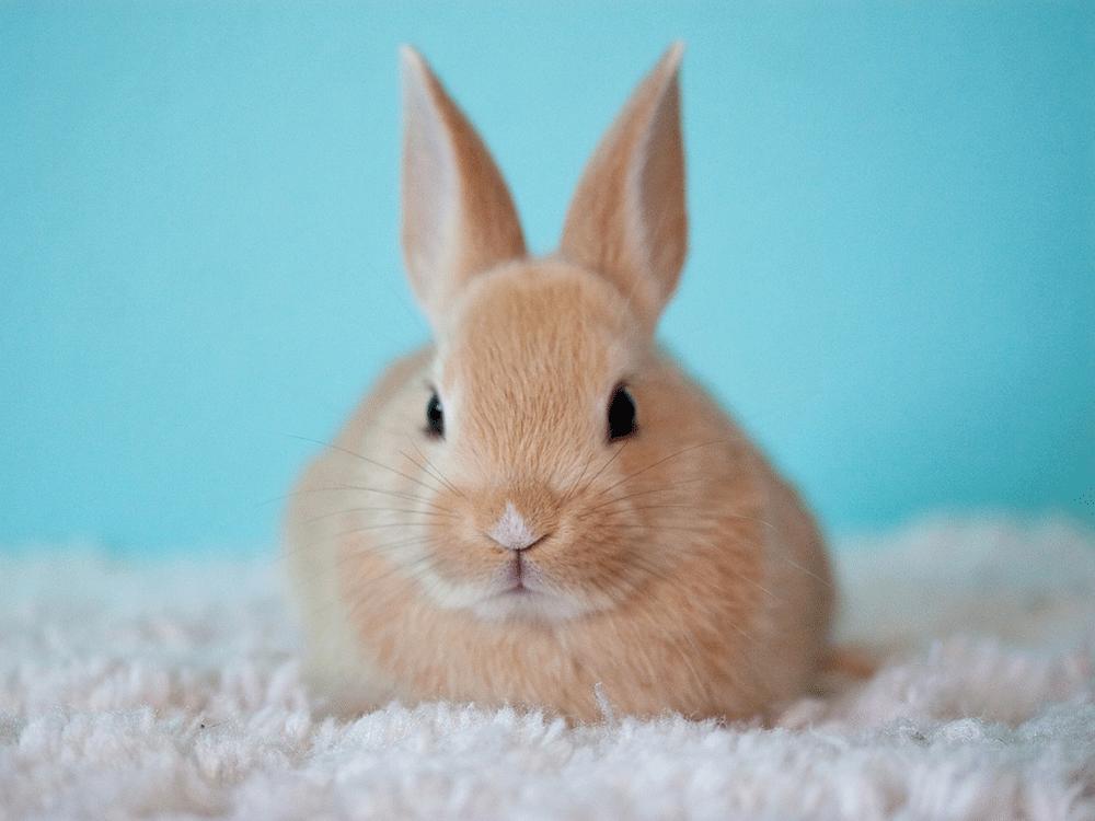 sintomas de que un conejo está enfermo