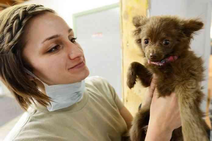 veterinario perros