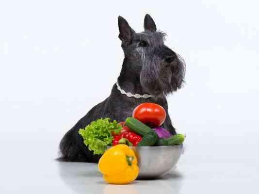 frutas buenas para los perros