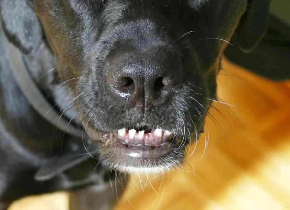 Aparatos para canes