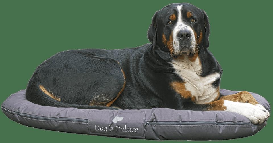 colchoneta para perros